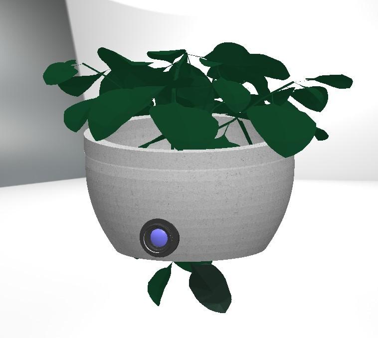 pianta-10